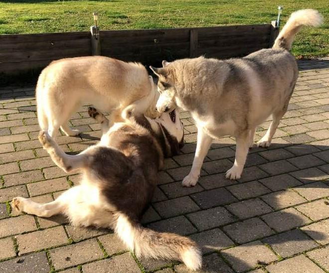 Mine 3 barf-hunde